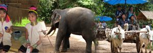 Elephant Safari Tour & Karen Long Neck